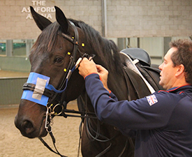 Pliance pressure mat recording pressure under the front of the noseband