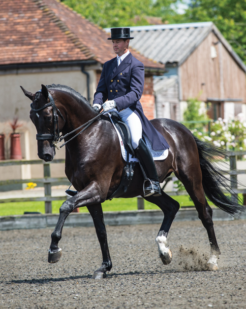 Fairfax Saddles - Scientifically Proven Saddles, Bridles and
